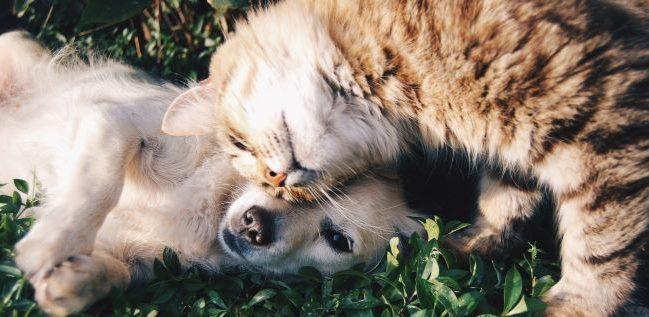 犬と猫が仲良く寝そべっています。