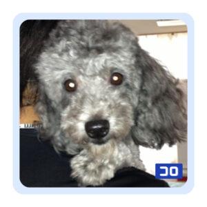 愛犬コロの写真